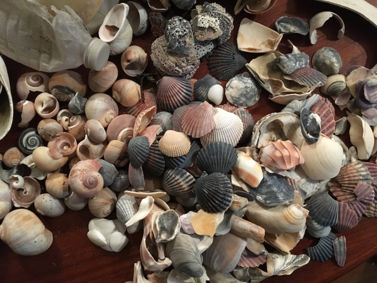 Lots of Shells 2